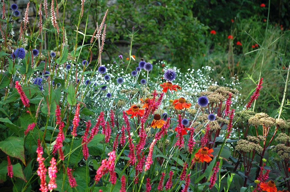 colourful planting is a haven for pollinating insects