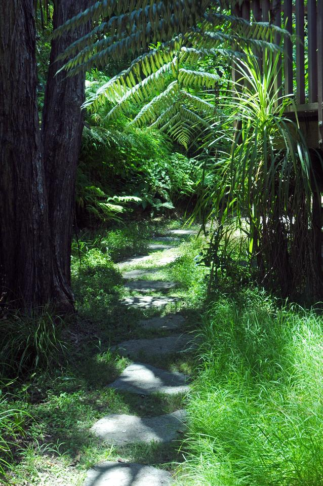 Natural stone stepping stones lead through the kanuka glade which features all native planting of meadow rice and basket grasses, rasp ferns and understorey shrubs