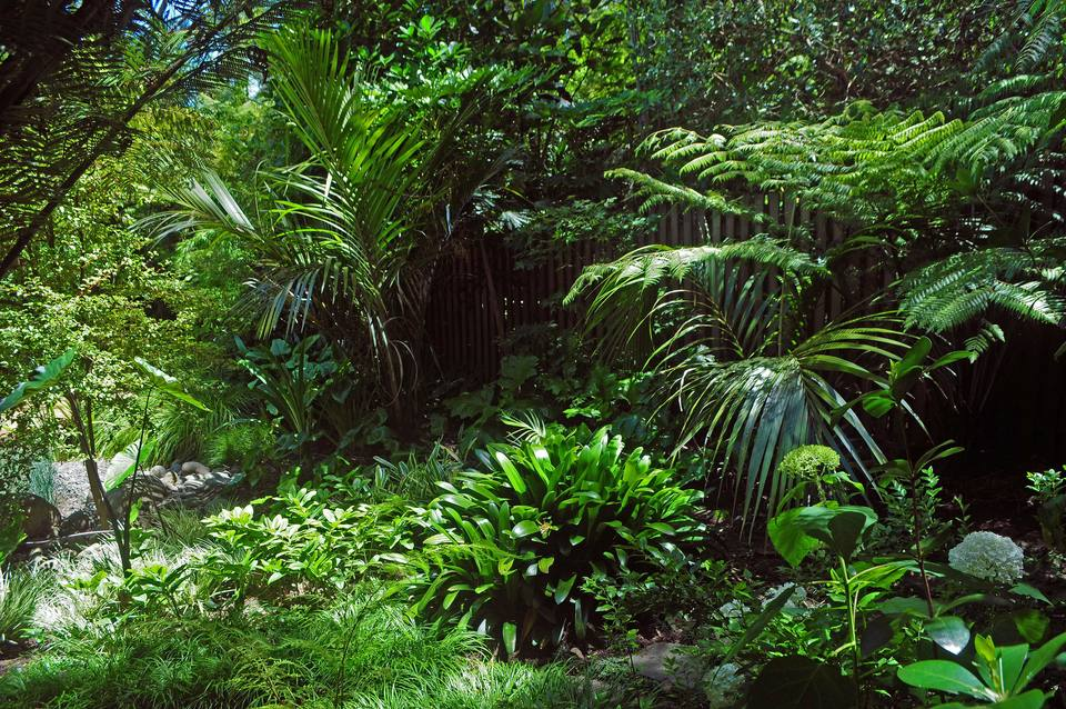 In the glades around the house a woodland garden has been established under the kānuka and nīkau, combining native ferns and ground layer plants with exotic perennials